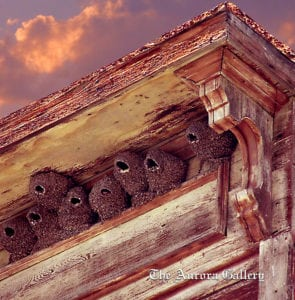 11-Swallows'-Nests-watermarked